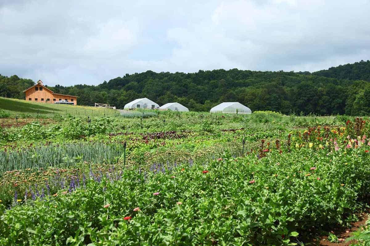 summer-crops