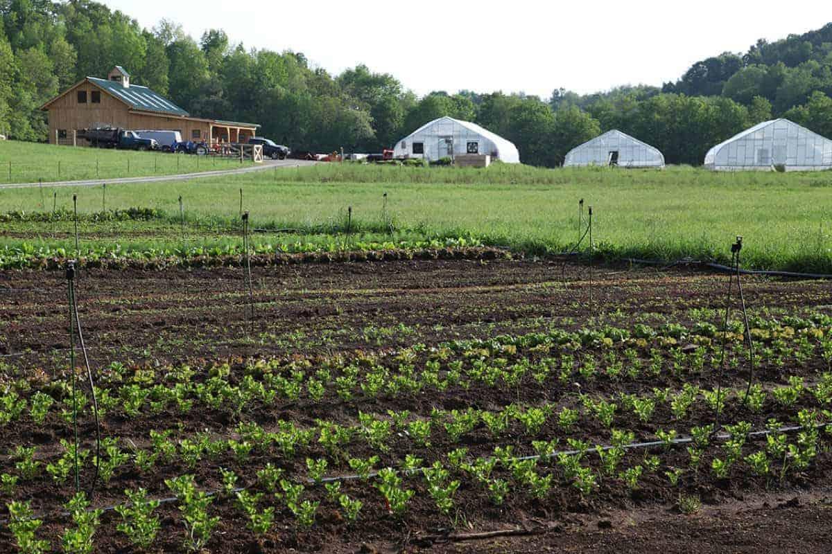 Riverstone Farm View