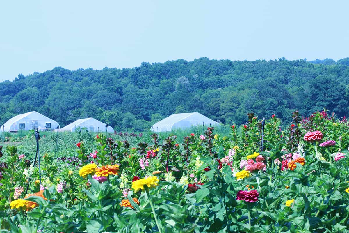 Blue meadow flowers nyc hd image flower and rose xmjunci fresh on the farm dinner riverstone anic izmirmasajfo