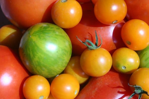 Riverstone Tomatoes