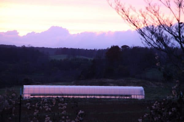 Hoop House at Sunset